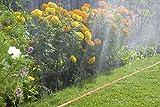 Gardena 996-20 Schlauch-Regner, orange, komplett mit Armaturen, - 4