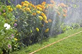 Gardena 997-22 Schlauch-Regner, orange, 100 m - 4