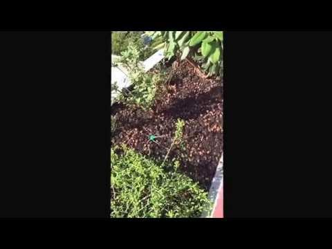Terrassenbepflanzung auf Balkon mit kleinen Sprühregner vollautomatisch