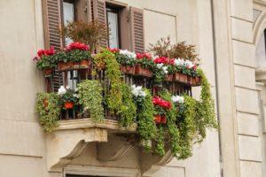 Grüne Balkonpflanzen dank Bewässerung