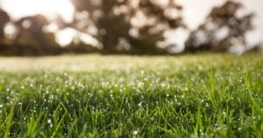 Rasen richtig bewässern Foto: Greg Brave / shutterstock.com