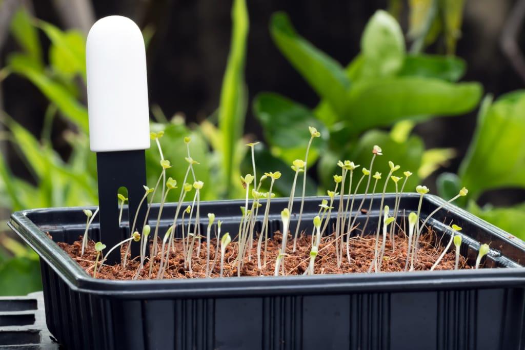 Mit einem Bodenfeuchtesensor kann die Bewässerung automatisiert werden