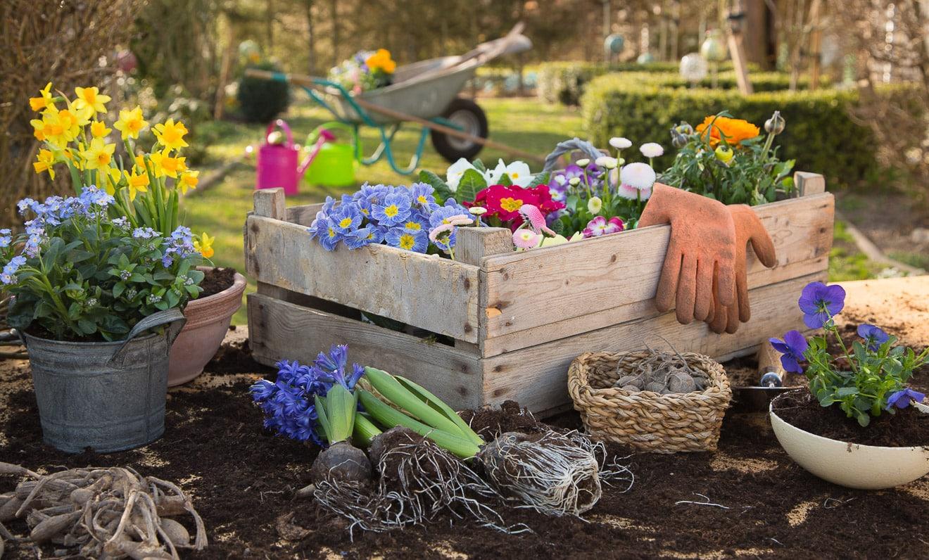 Gartenarbeiten im Jahr im Überblick mit dem Gartenkalender