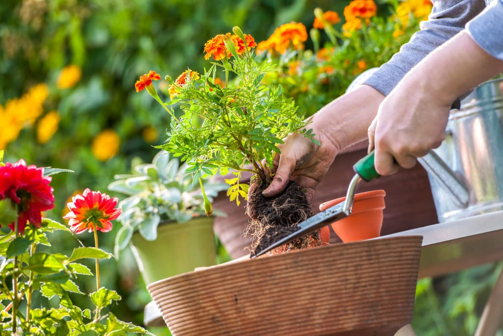 Balkon- und Topfpflanzen pflanzen