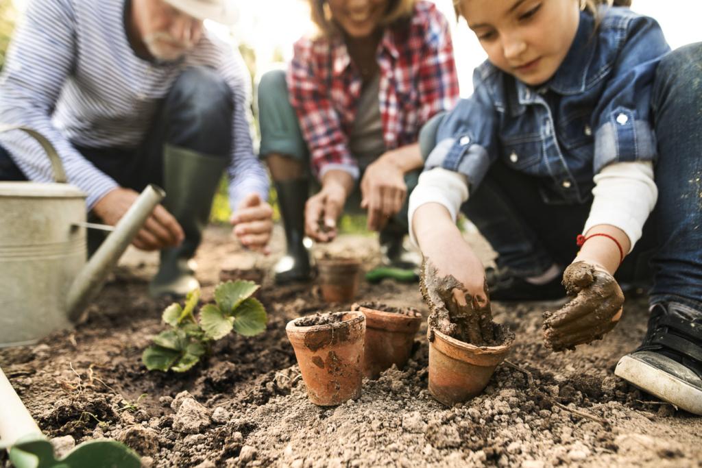 Familie bei der Verpflanzung von jungen Erdbeerpflanzen