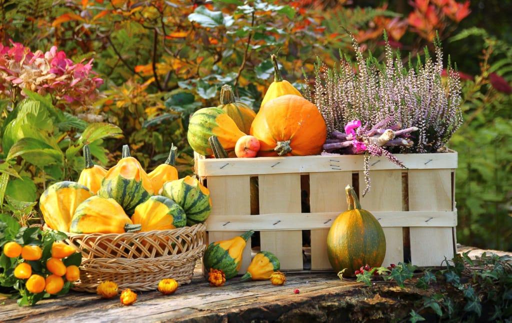 Erntezeit im Oktober