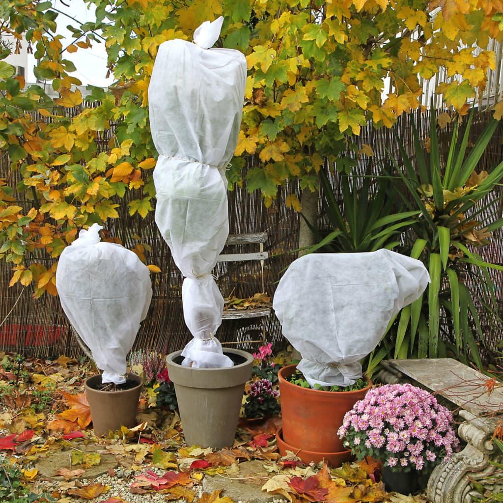Pflanzen vor Frost schützen
