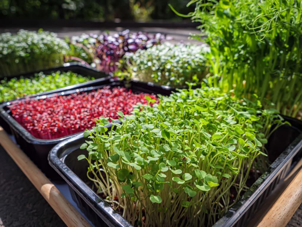 Auswahl an Gartenkräutern