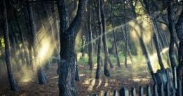 Bäume gießen: so bewässern Sie im eigenen Garten richtig?