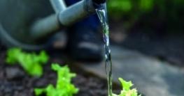 Gartenpflanzen gießen – aber richtig